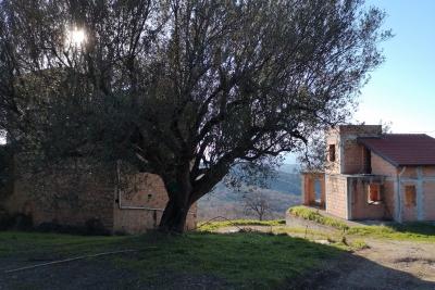 Immobiliare vendita affitto Vallo della Lucania Cilento ...